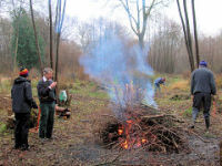 Coppicing in Park Wood